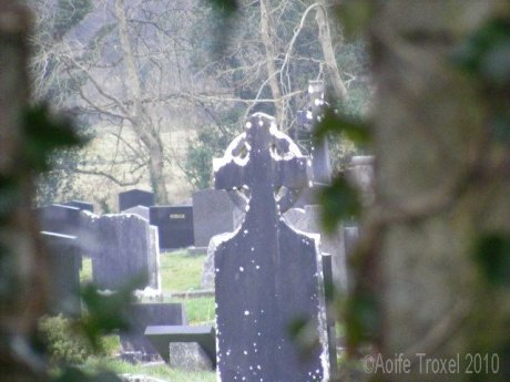 Graveyard Through Ivy